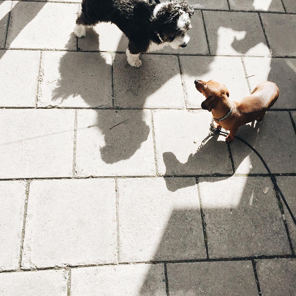 dödssöta hundar