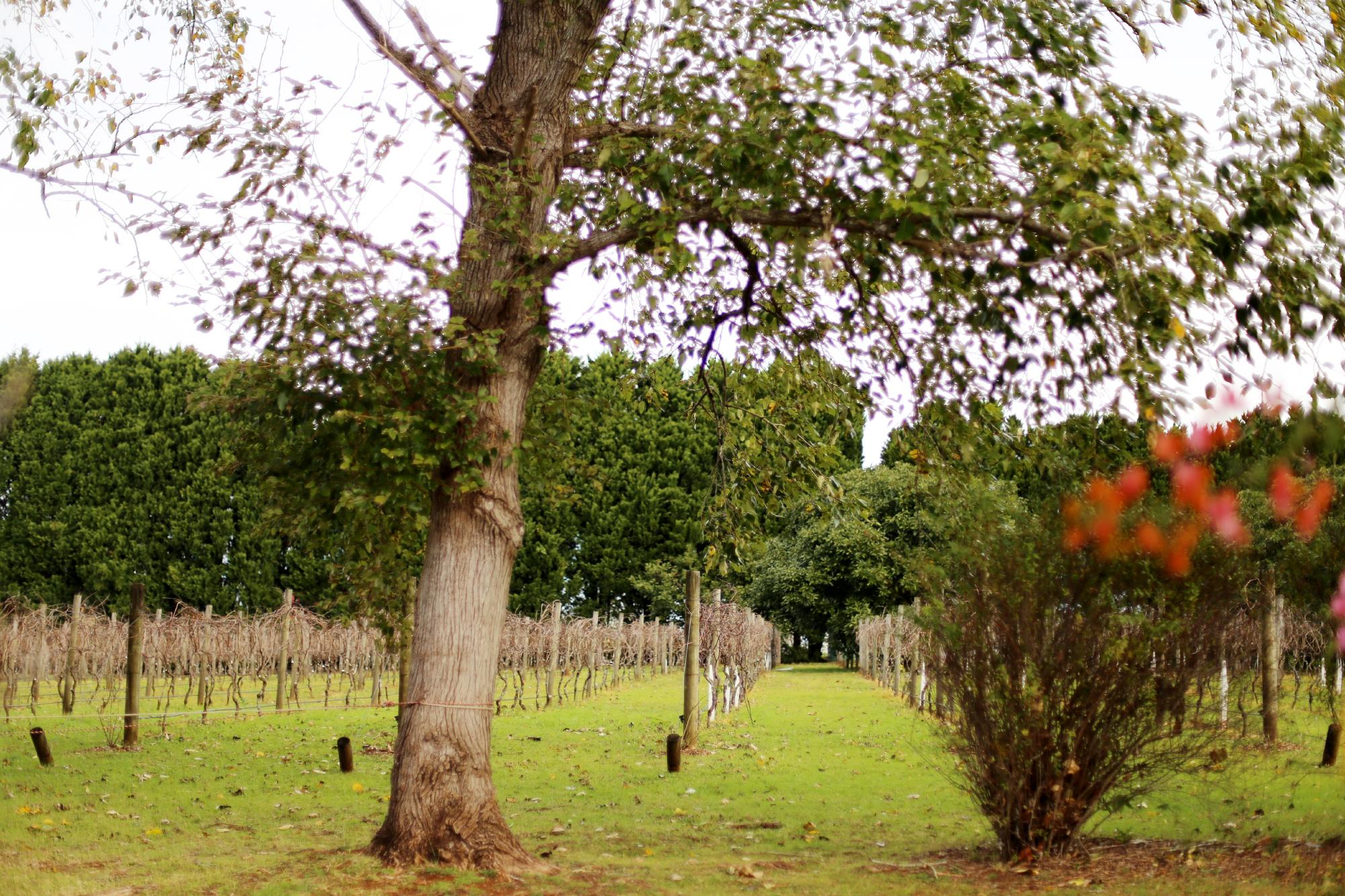 kring trädtopparna