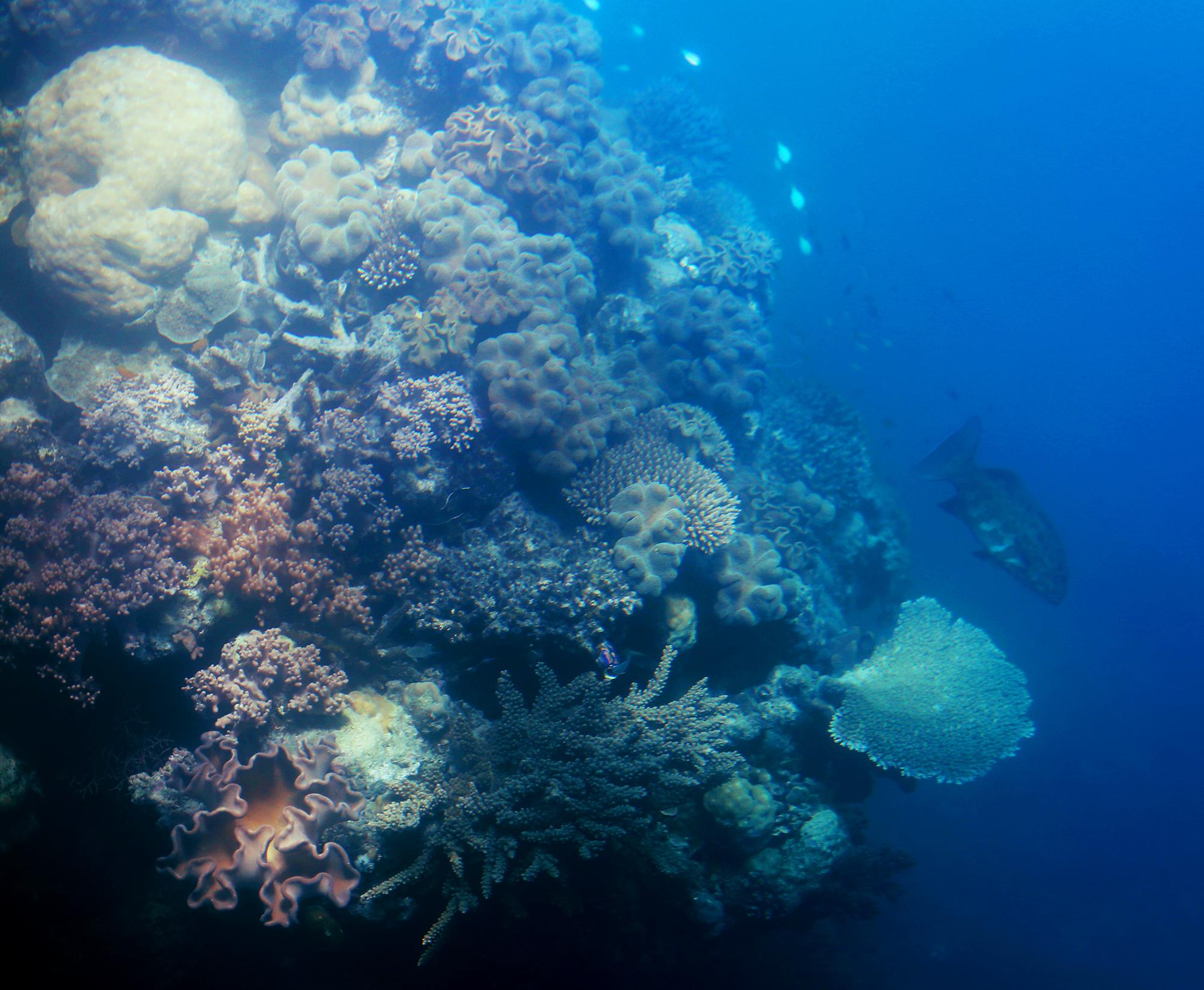 korall stora barriärrevet - sara edström20