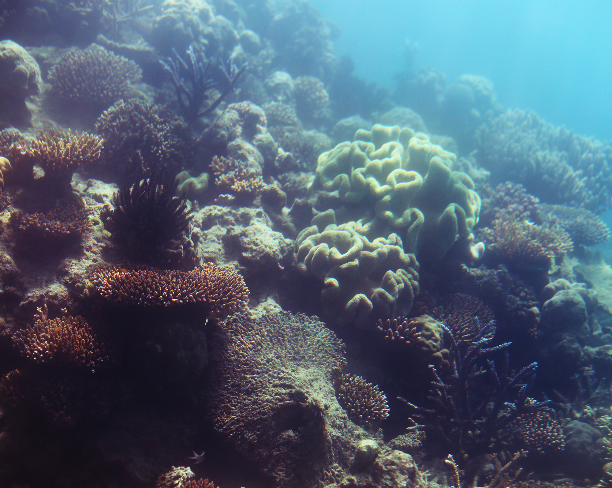 korall stora barriärrevet - sara edström22