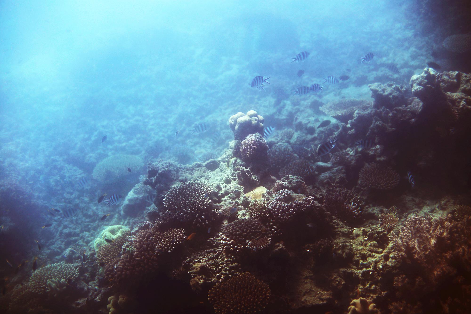 korall stora barriärrevet - sara edström25