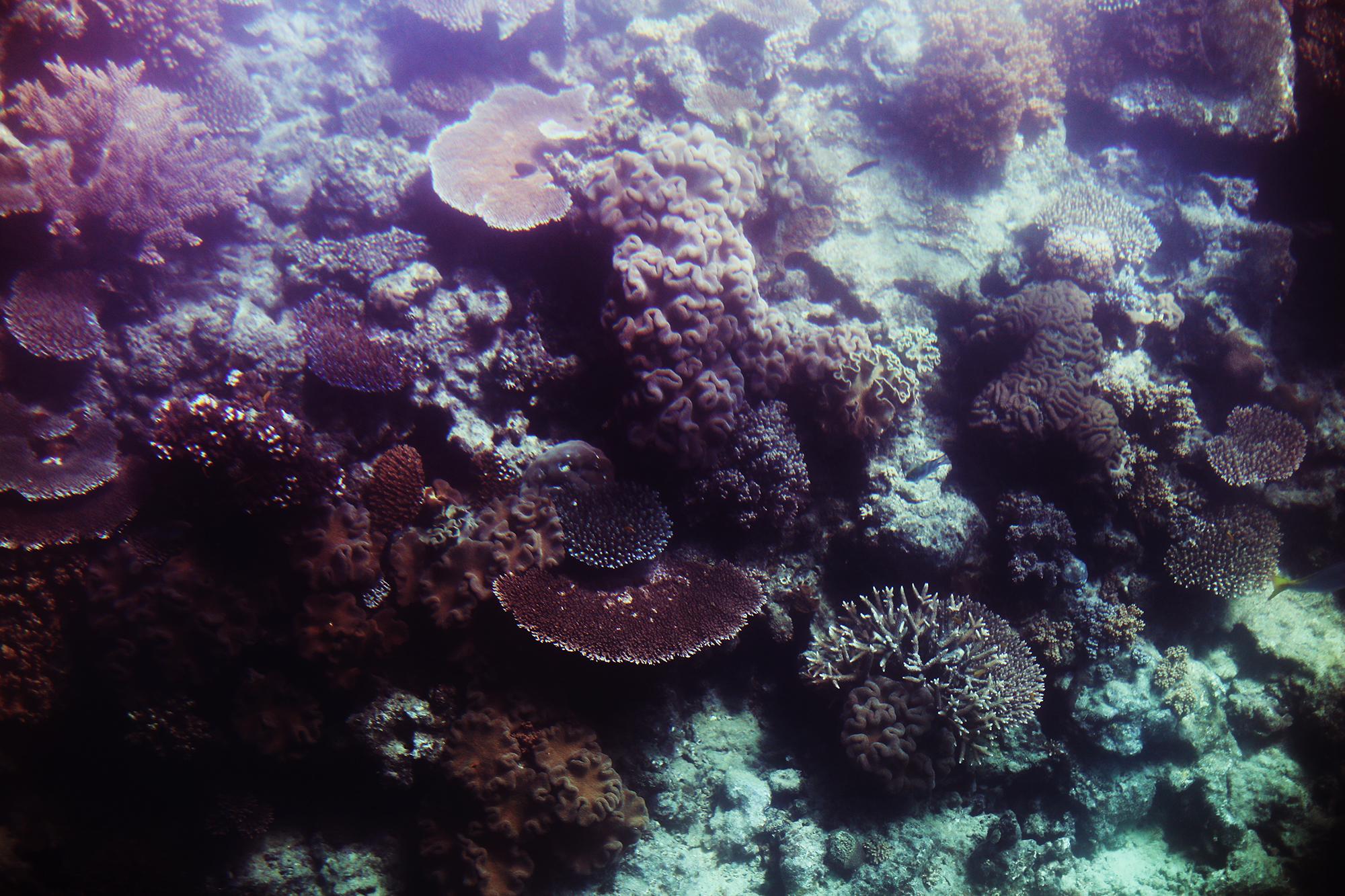 korall stora barriärrevet - sara edström27