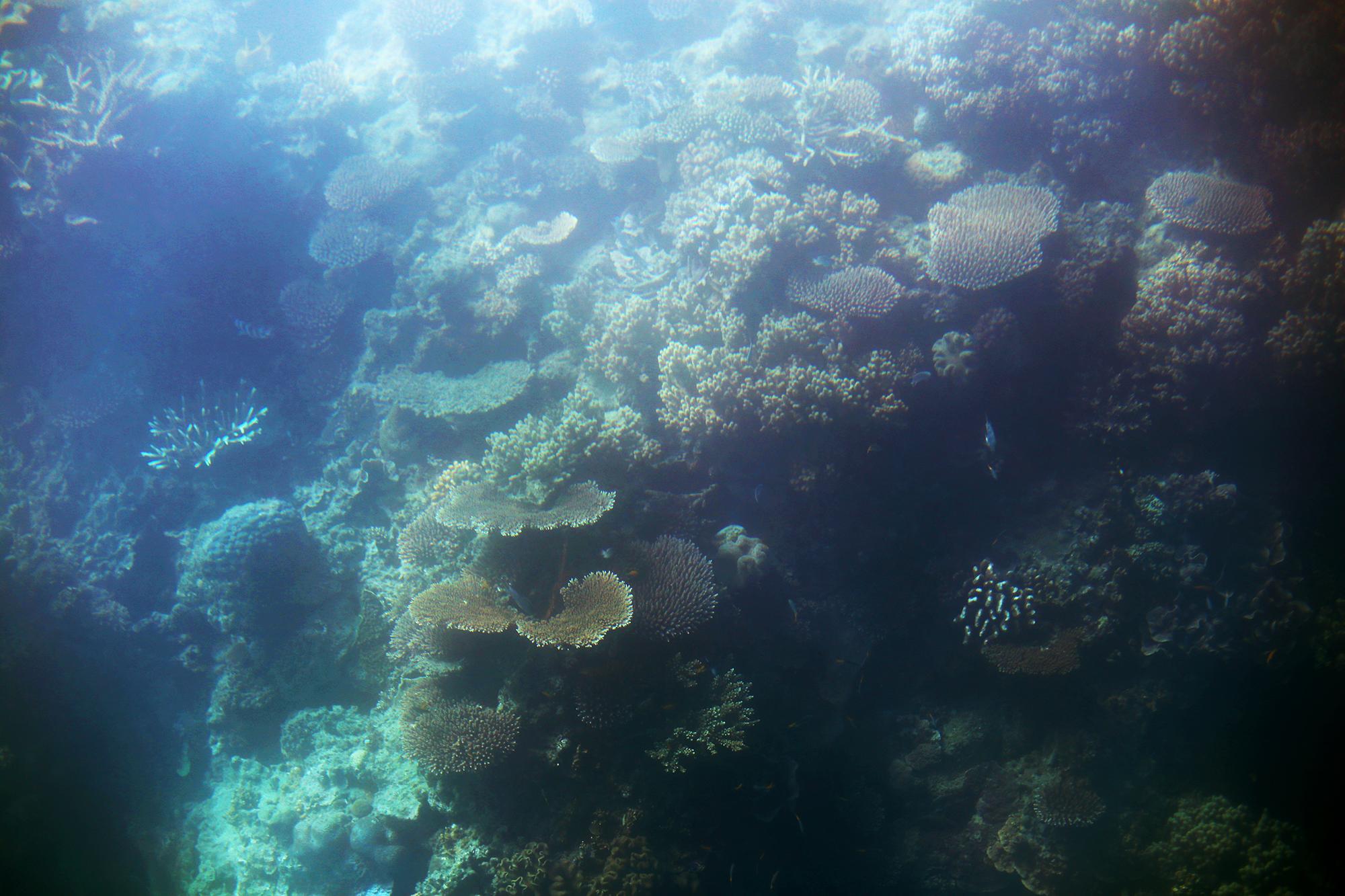 korall stora barriärrevet - sara edström29