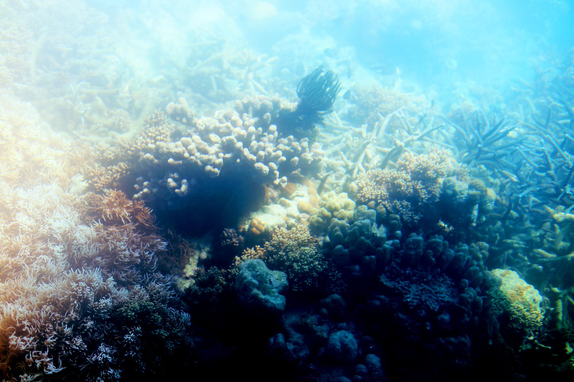 korall stora barriärrevet - sara edström31