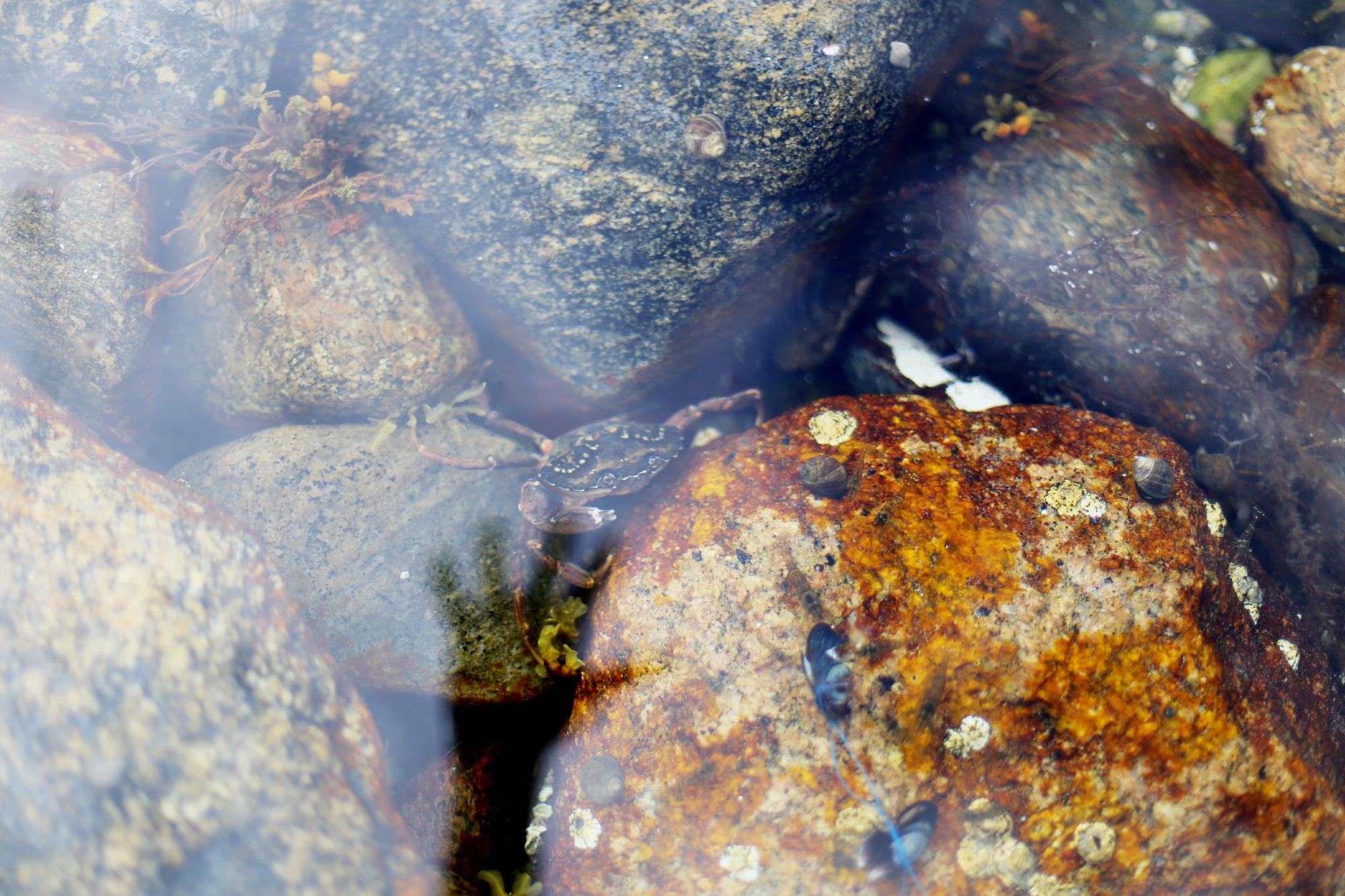 torsdag vid tjurpannans naturreservat16