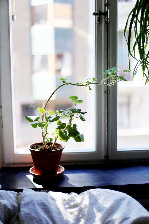det gröna i vårt hem11