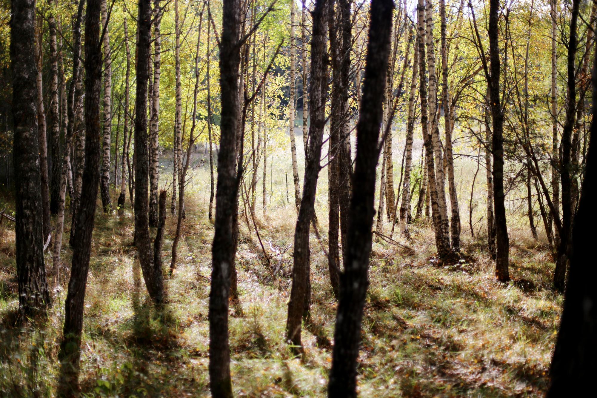 söndag i skogen11