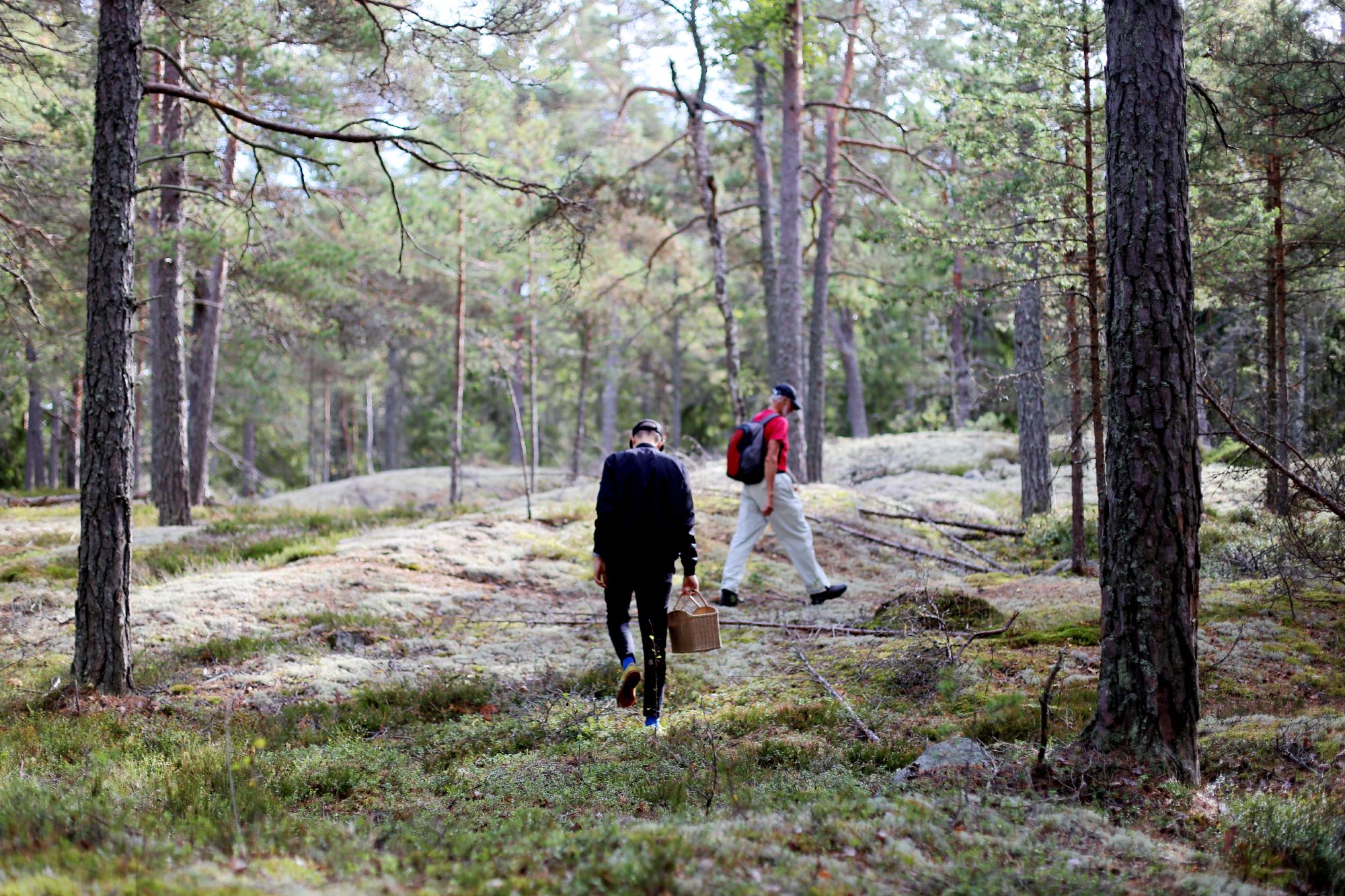söndag i skogen20