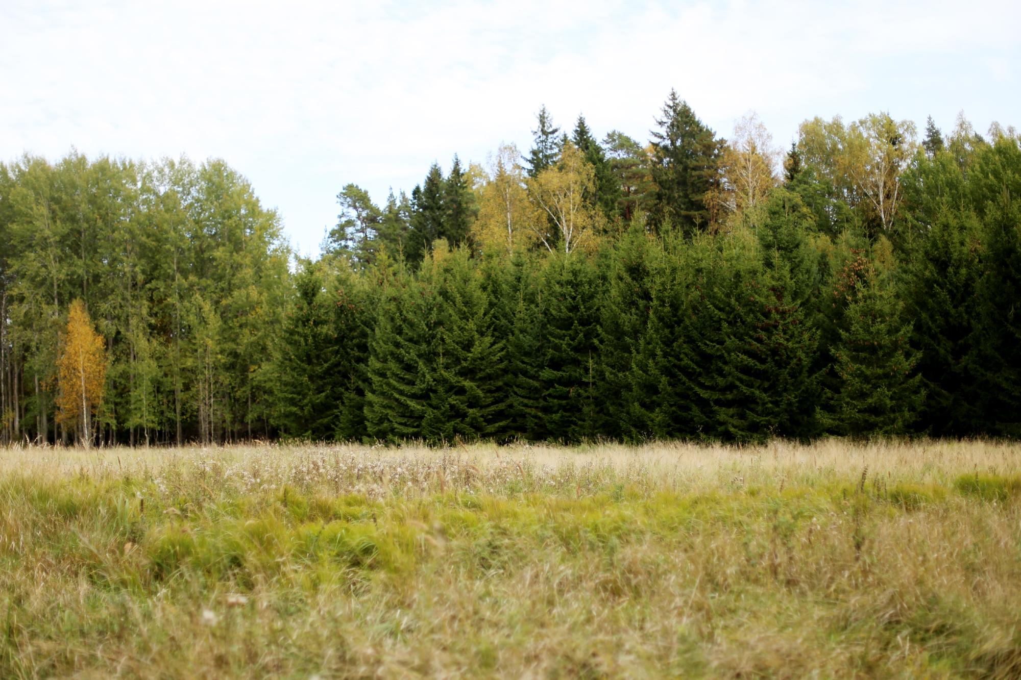 söndag i skogen27