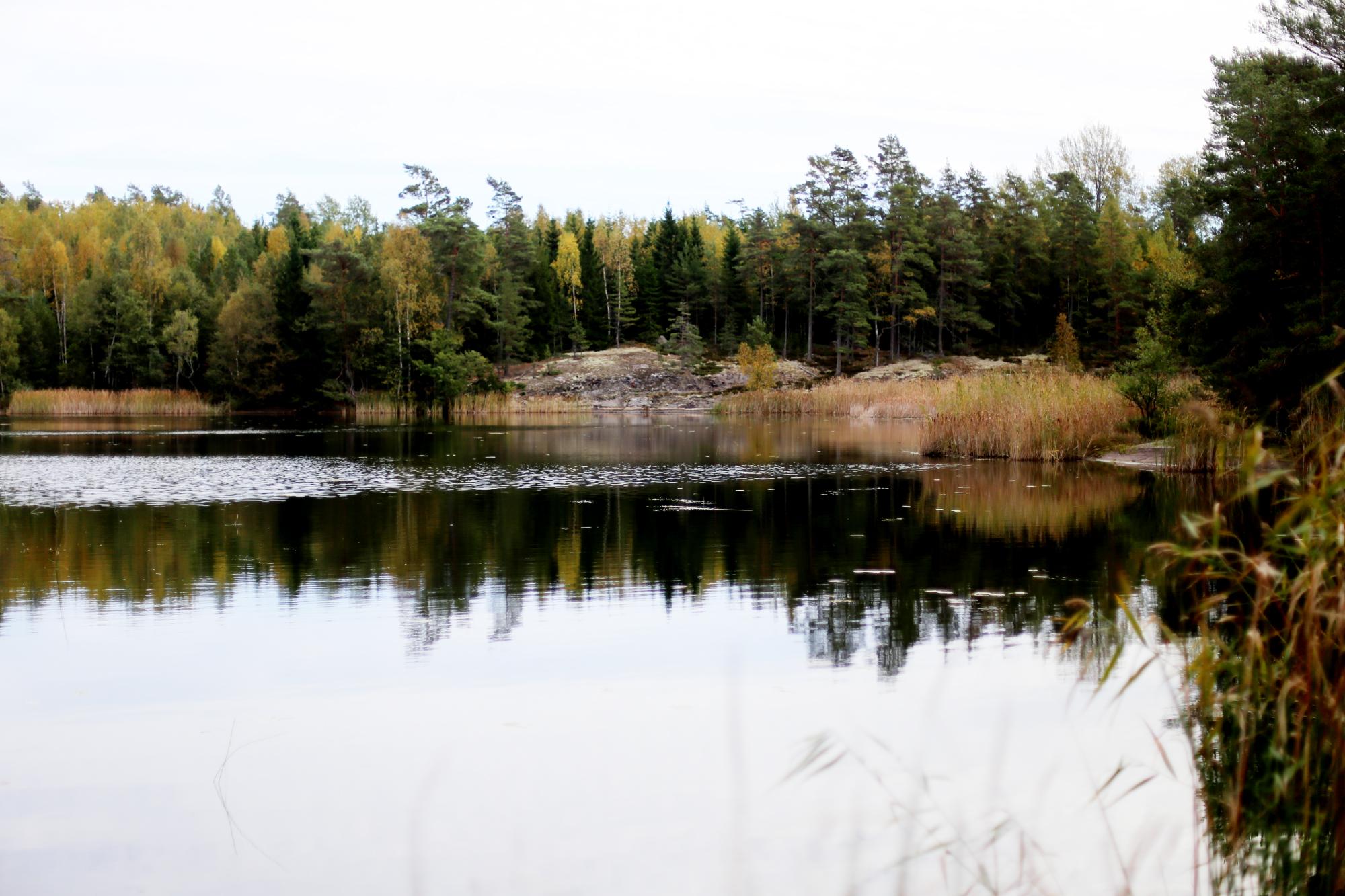 söndag i skogen29
